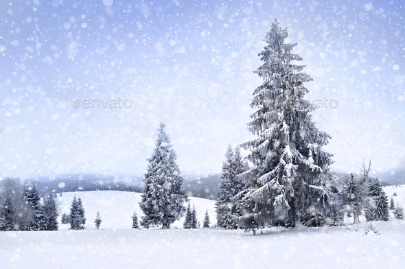 Fairy winter landscape with fir trees and snowfall. Christmas greetings concept - Stock Photo - Images