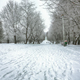 Snow-covered trees in the city park - PhotoDune Item for Sale