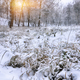 Snow-covered grass in city park at sunset - PhotoDune Item for Sale