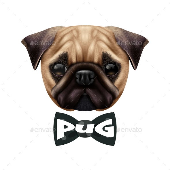 Realistic Pug Dog Portrait - Animals Characters