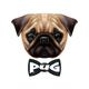 Realistic Pug Dog Portrait