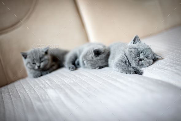 Cute kittens lying on a couch. - Stock Photo - Images