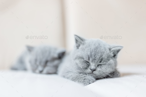 Cute tiny cat sleeping sweetly on his tummy. - Stock Photo - Images