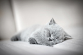 Lazy fluffy kitten sleeping. - PhotoDune Item for Sale