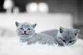Two tiny cats laying next to each other - PhotoDune Item for Sale