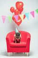 Birthday pug dog on a festive background. - PhotoDune Item for Sale