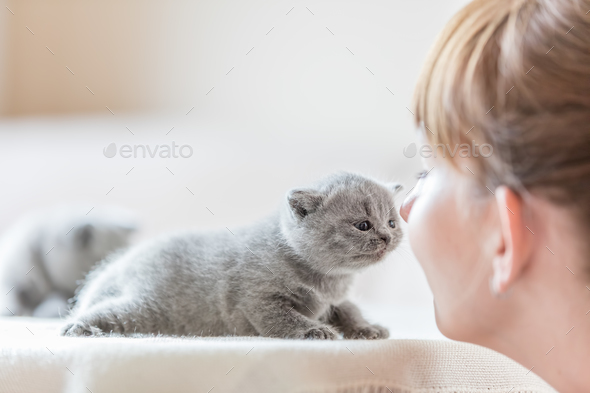 Cute little cat and woman rubbing noses. - Stock Photo - Images