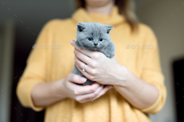 Grey adorable kitty held by a woman - Stock Photo - Images