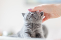 Cute kitten loves being stroked by woman's hand - PhotoDune Item for Sale