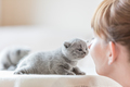 Cute little cat and woman rubbing noses. - PhotoDune Item for Sale