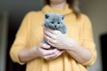 Grey adorable kitty held by a woman - PhotoDune Item for Sale