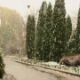Snow and Rain in the Autumn Park - VideoHive Item for Sale