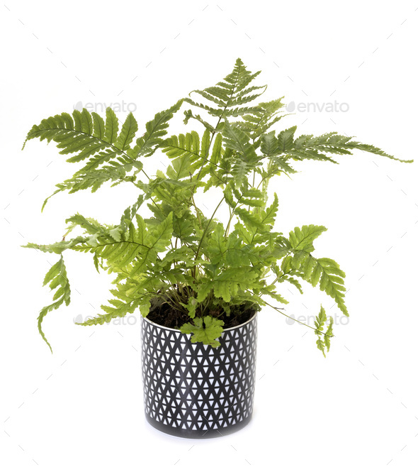 plant in pot - Stock Photo - Images