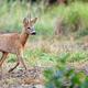 Buck deer in a clearing  - PhotoDune Item for Sale