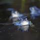 Moor frog in the wild  - PhotoDune Item for Sale