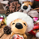 Christmas decoration with toy dog - PhotoDune Item for Sale