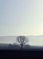 misty morning sunrise - PhotoDune Item for Sale