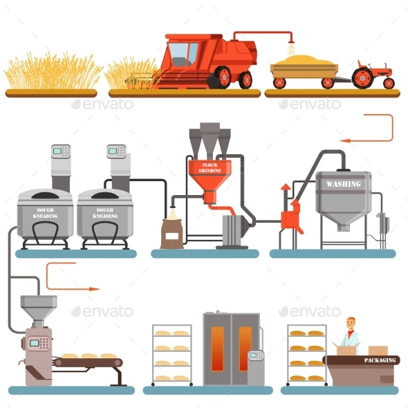 GraphicRiver Bread Production Process Stages From Wheat Harvest 21028519