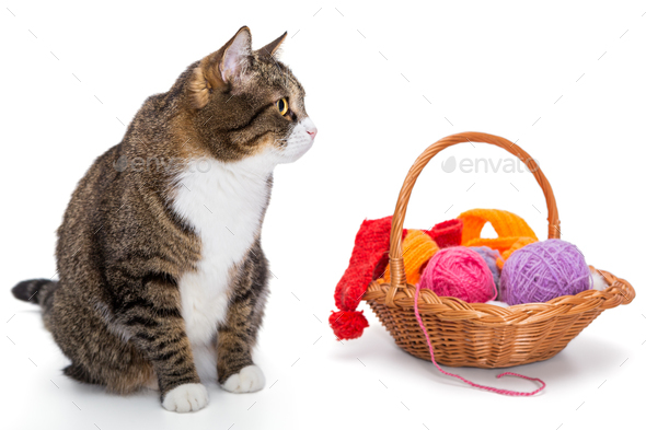 Big  gray cat and a basket - Stock Photo - Images