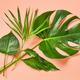 green tropical leaves - PhotoDune Item for Sale