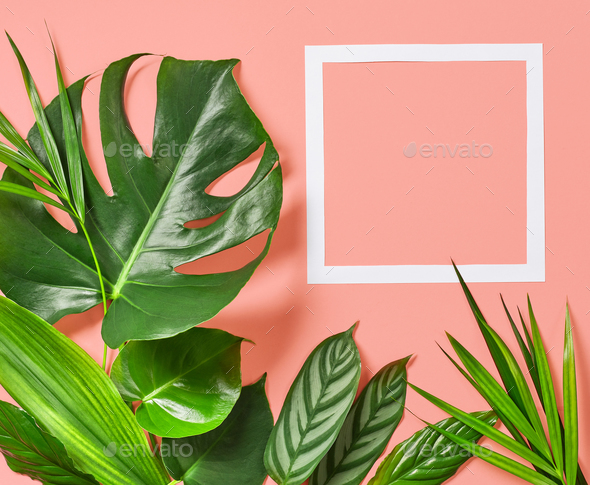 Tropical leaves and white frame - Stock Photo - Images