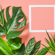 Tropical leaves and white frame - PhotoDune Item for Sale