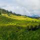 Field On Mountain