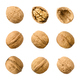 Walnuts, whole and opened, isolated on white background - PhotoDune Item for Sale