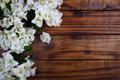 bougainvillea on wooden background - PhotoDune Item for Sale