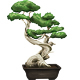Bonsai Tree - GraphicRiver Item for Sale