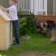 Father and Son Build a Kennel - VideoHive Item for Sale