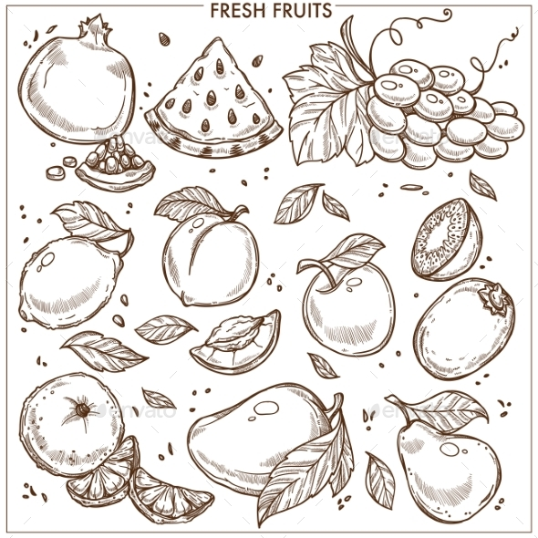 Fruits Sketch - Food Objects