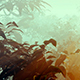 Mysterious Morning Mist In The Forest - VideoHive Item for Sale