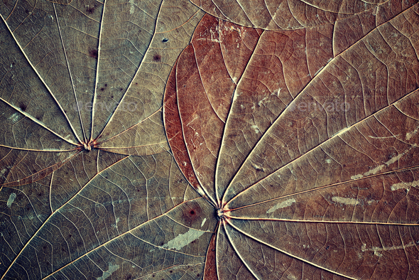 Old dried leaves background. - Stock Photo - Images