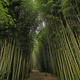 Bath Through a Bamboo Forest - PhotoDune Item for Sale