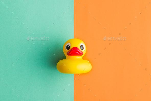 Flat lay of bath duck. - Stock Photo - Images