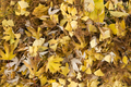 Yelow and brown fallen leaves - PhotoDune Item for Sale