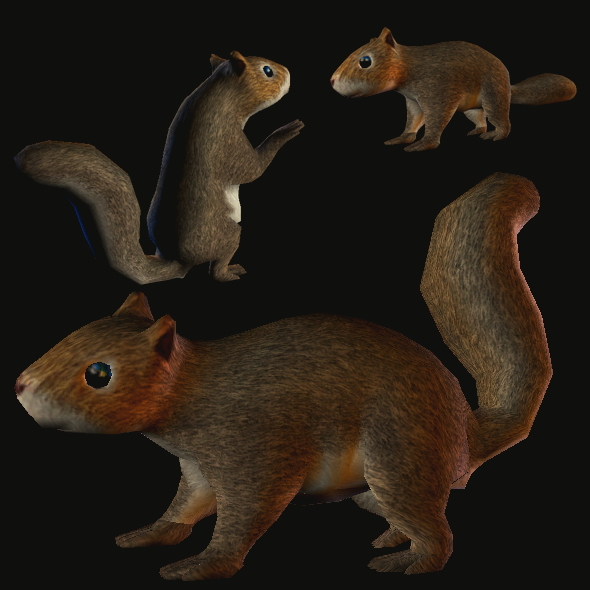 3DOcean Squirrel in Lowpoly 5966394