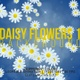 Daisy Flowers Backgrounds 1 - VideoHive Item for Sale