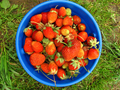 Basket of fresh strawberries - PhotoDune Item for Sale