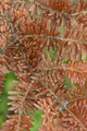 Red Norway spruce tree detail - PhotoDune Item for Sale