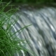 Flowing Water Splash on Waterfall with Green Grass - VideoHive Item for Sale