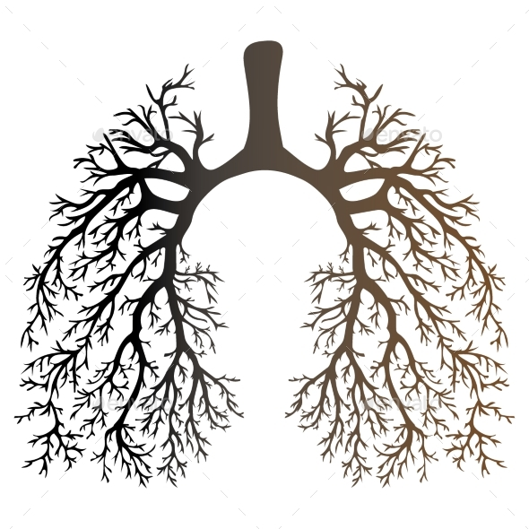Human Lungs Respiratory System - Flowers & Plants Nature