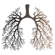 Human Lungs Respiratory System