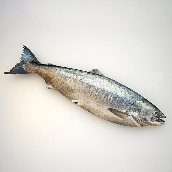 3DOcean Raw salmon fish 21059344