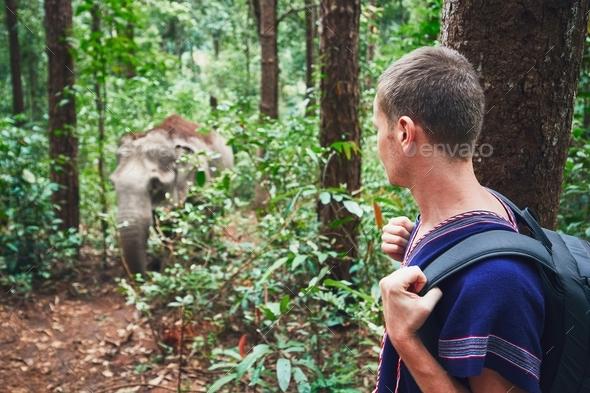 Traveler with elephant - Stock Photo - Images