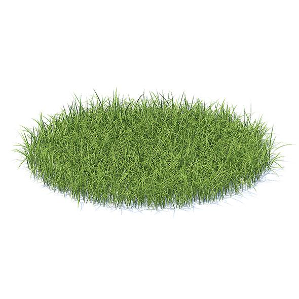 Tall Grass 3D Model - 3DOcean Item for Sale