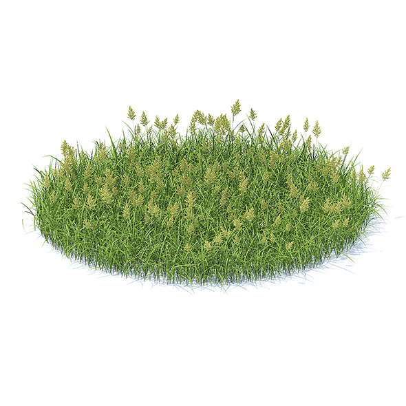 Flowering Grass 3D Model - 3DOcean Item for Sale