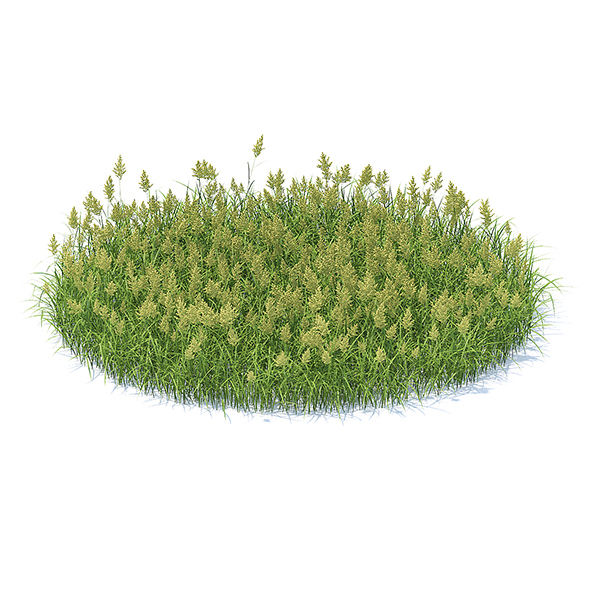 3DOcean Flowering Grass 3D Model 21062024
