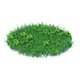 Grass with Plants 3D Model - 3DOcean Item for Sale